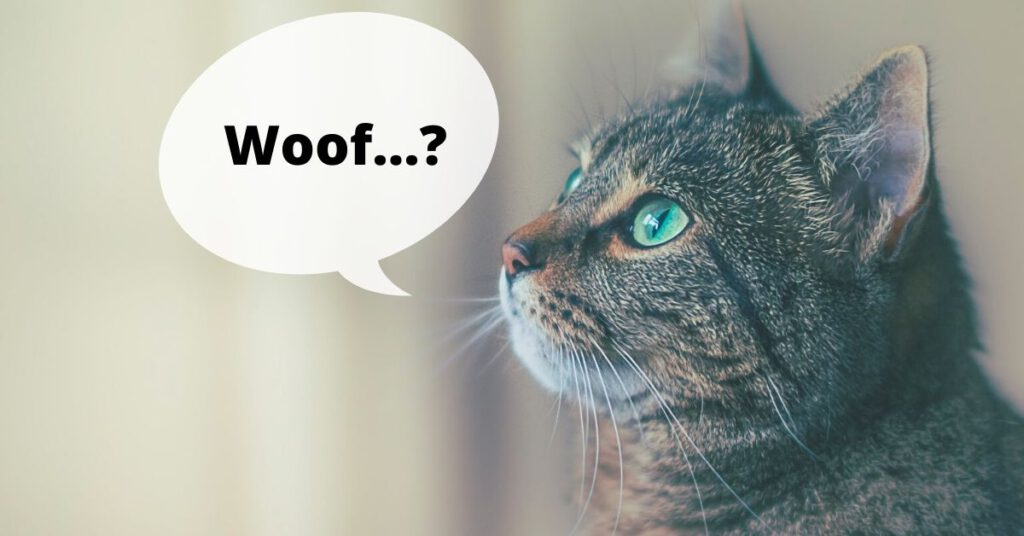 Image of a cat pretending to bark symbolizing expecting an ATS to do something it can't do